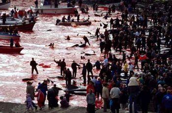 masacre-islas-feroe.jpg